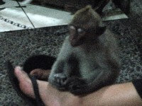 sleeping baby monkey